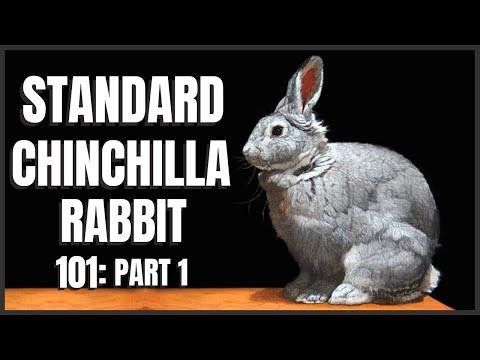 , title : 'Standard Chinchilla Rabbit 101: Part 1