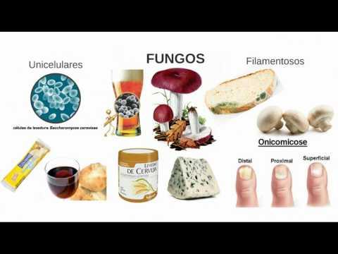 Do que curar um fungo abaixo de remédios de gente de ratos