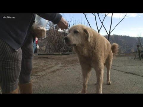 Koira selvisi metsäpalosta – Odotti omistajiaan palaneen kodin luona