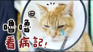 【黃阿瑪的後宮生活】嚕嚕看病記!