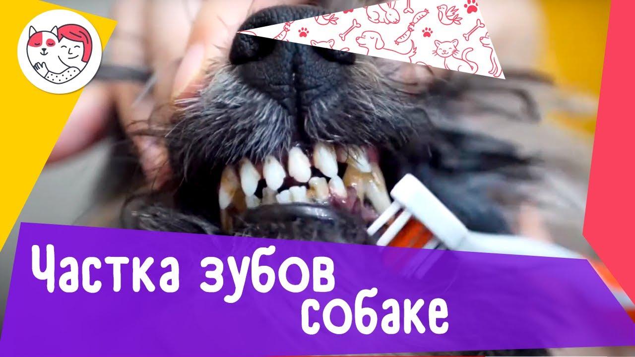 Как правильно чистить зубы собаке: видеоинструкция