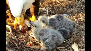 """""""We'd rather have had Easter Eggs!"""" Breakfast at Decorah Eagles. 07.56 / 21 April 2019"""