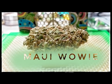 Strain Review Mw Maui Wowie Mmj Total Health Care