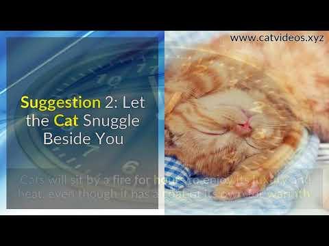 Grumpy Cat? 8 Super Tips to Make Your Grumpy Cat Happy!