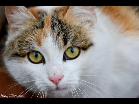 Фото сессия Коты и Кошки нашего Двора