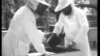 Фильм о пчеловодстве 1969 г.  (Часть 1)