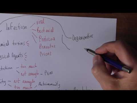 Video Cause of Disease 2, Exogenous factors
