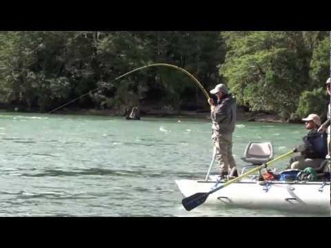 Fighting the salmon