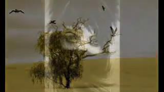 تحميل اغاني حسين الجسمي الراعي والذيب MP3