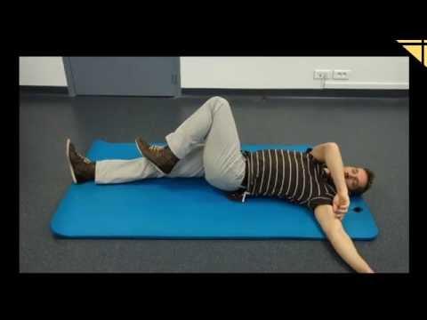 La zone humérale du muscle du membre supérieur