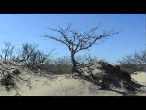 Under the Montauk Moon Image Video Newest