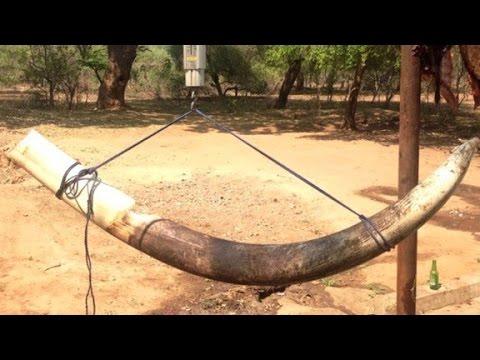 Der Elefanten-Jäger