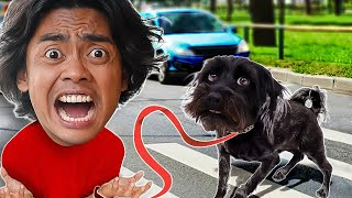 My Dog WALKS ME For 24 Hours