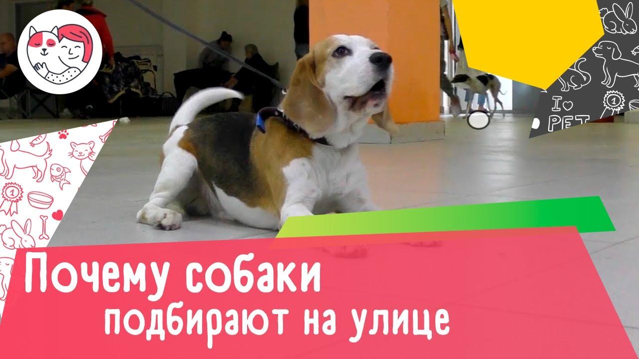Почему собаки подбирают на улице: 4 причины