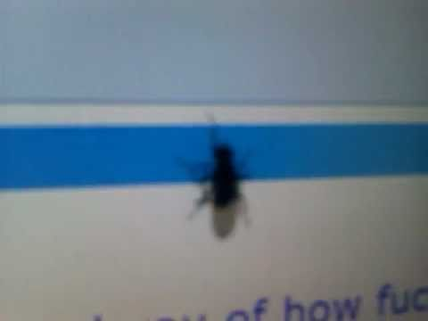 What Happens When A Bug Lands On A Touchscreen?