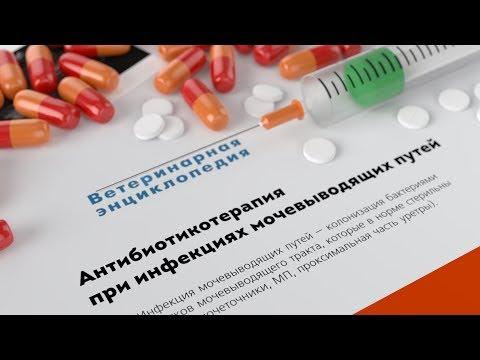 Лечении простатита форум