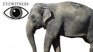 EYEWITNESS | Mammal | S2E5