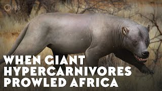 When Giant Hypercarnivores Prowled Africa