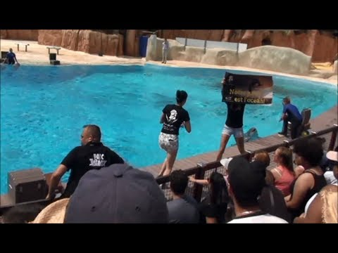 Animal rights activists have interrupted Dolphins Show at Parc Astérix, Paris