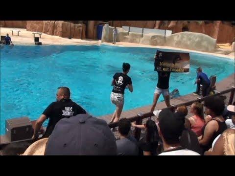 Animal rights activists have interrupted Dolphins Show at Parc Astérix, Paris