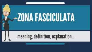 What is ZONA FASCICULATA? What does ZONA FASCICULATA mean? ZONA FASCICULATA meaning & explanation