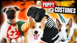 DIY DOG & PET COSTUMES (CUTE!!!!!)
