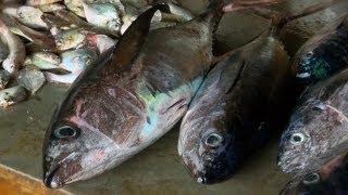 Fish Market in Diglipur