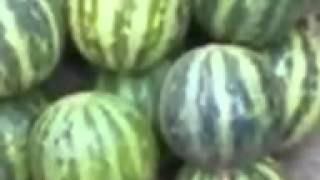 Uzbekiskiy arbuz prikol