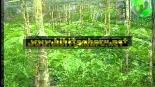preview picture of video 'Bibit Gaharu Timor Tengah Selatan Hub.081251826868 PT.Borneo Nusantara Internasional Agarwood'