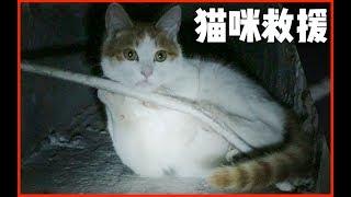 【花花与三猫】危急救援!堕入20米深井的绝望猫咪,求你们不要再散养了!
