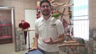 Trained Parrots Q&A with Parrot Wizard