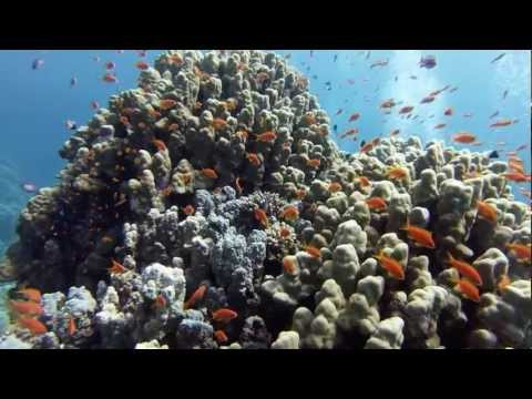 Tauchen mit Extra Divers Brayka Bay 2013, Brayka Bay,Ägypten