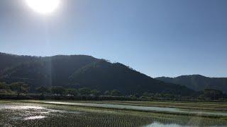 【生配信のおっさん】~長浜市木之本町~