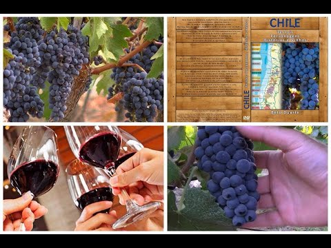, title : 'Full Documentary - Chile - Terroir, Characters, Stories, Wines...