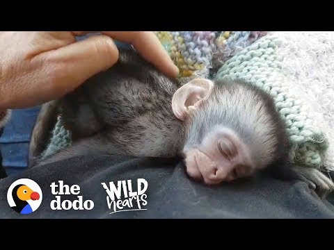 Couple Drops Everything to Save Thousands of Vervet Monkeys | The Dodo Wild Hearts