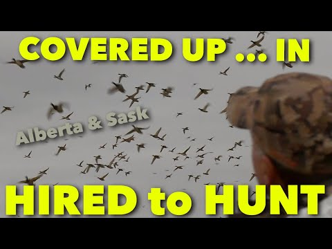 COVERED UP ... in SASK_Hired to Hunt Season 6: Hunting Limits of Ducks & Geese at Ongaro's