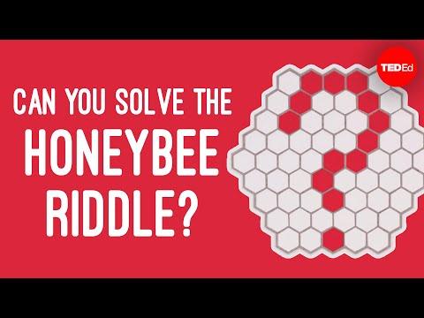 חידת דבורי הדבש: אתגר לחשיבה ולמוח