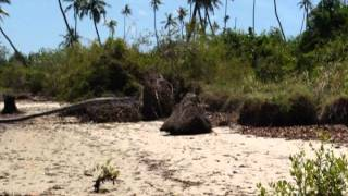 preview picture of video 'Climate Change Adaptation for Tanzania's Coastal Villages'