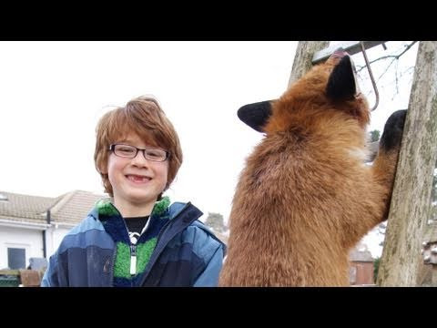The colossal 26lb fox