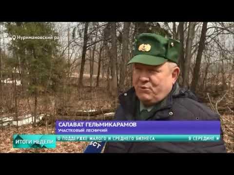 Специальный репортаж «Закон о валежнике» на телеканале БСТ
