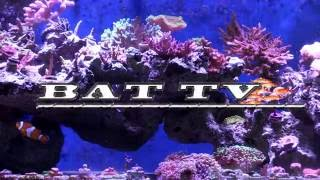 BAT TV ORLANDO ESPINOSA