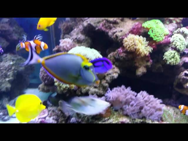 Beautiful mixed Reef tank/Marine aquarium