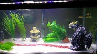 How To Cycle A Fish Tank Using Fish