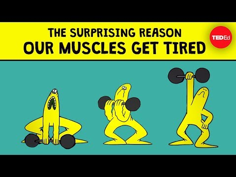 Why Do Your Muscles Get Tired After Gym?