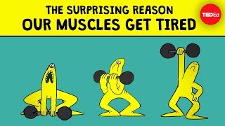 The surprising reason our muscles get tired - Christian Moro