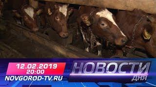 12.02.2019 Новости дня 20:00