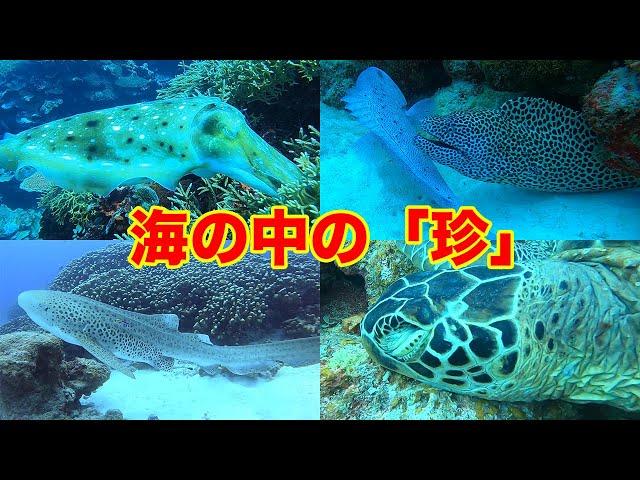 石垣島ダイビング|海の中の珍しい生物&光景|ビーチライフ石垣島