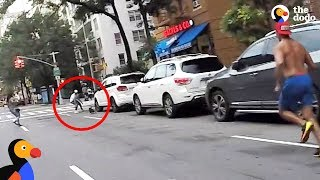Biker Spots Dog Stuck On NYC Highway And Saves His Life   The Dodo