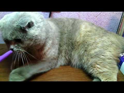 Беременность у кошек , как распознать ?