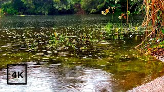 RAIN ON A LAKE with Soft Sound of Wildlife and Bird Sounds, RAIN sounds on Water for Relaxing, Sleep